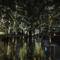 lights-adorn-the-trees-out-the-casino-200x200 Portfolio