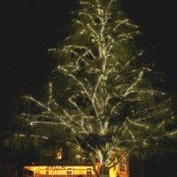 mt-barker-sa-new-led-tree-liights-200x200 Portfolio