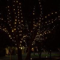 rla-tree-lights1-200x200 Portfolio