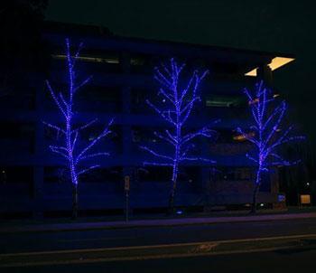 Blue-trees-1 Portfolio